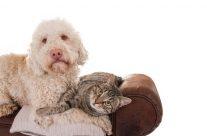 Hund und Katze: So werden sie Freunde fürs Leben!