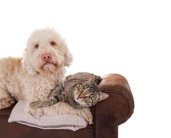 hund und katze so werden sie freunde f rs leben. Black Bedroom Furniture Sets. Home Design Ideas