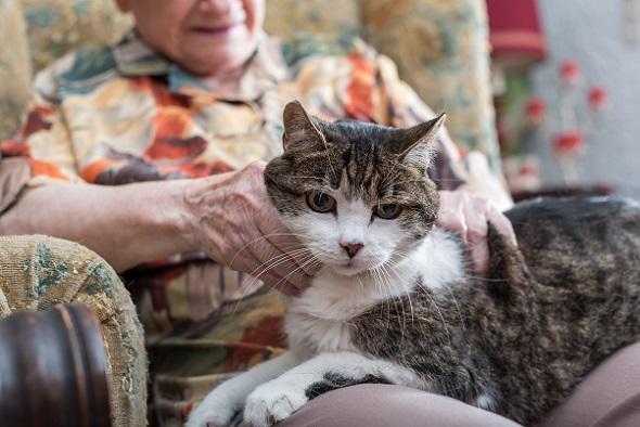 Wenn Kätzchen und Kater älter werden lassen die Sinne rapide nach.(#02)