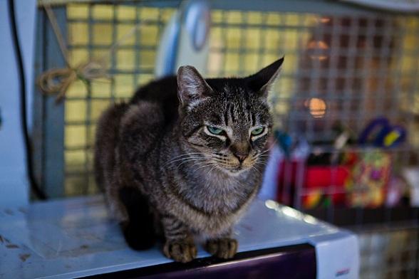 Wenn eine Katze so einige Jahre alt geworden ist, kann sich das Alter auch in schlechter Hygiene bemerkbar machen.