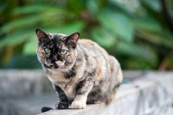 wenn katzen nicht mehr miauen