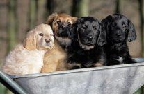 25 Hundebilder: Süß und lustig auf vier Beinen