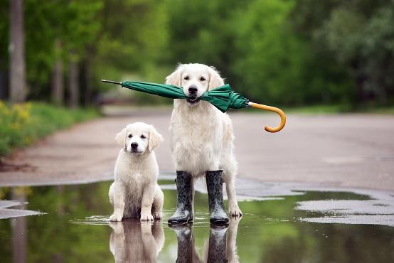 Die Beiden sind auch bei Regen gut ausgerüstet (#09)
