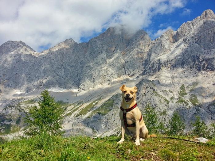 Unterkünfte finden im Urlaub mit dem Hund #1