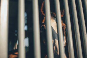 Die SOS-Pferdehilfe hat auch die artgerechte Haltung von Pferden als Thema. (#1)
