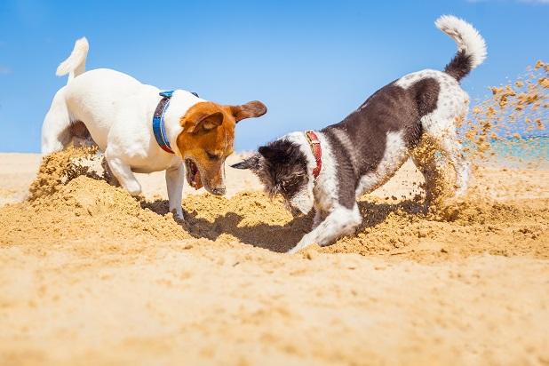 Auch wenn man nicht genau sagen kann, wie viel Auslauf Hunde im Allgemeinen brauchen, gibt es doch eine Faustregel für das Minimum an Bewegung. (#05)