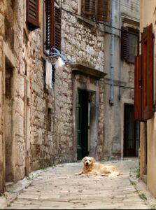 Hundestrände und eine autofreie Altstadt ermöglichen einen frein Auslauf für die Fellnase. (#2)