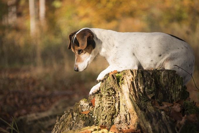 Doch im Herbst gibt es neben Blättern, Hundefreunden und Kastanien noch mehr zu entdecken. (#09)