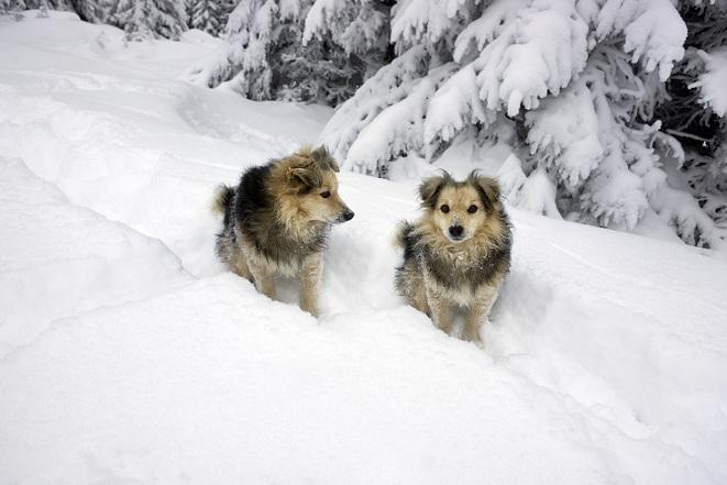 Apropos, Ball: Auch im Winter ist es sinnvoll, den Ball nicht mitzunehmen. Schnell ist ein kleiner Tennisball in der verschneiten Landschaft verloren. (#13)
