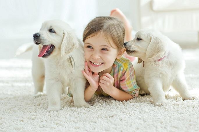 Ein Hund ist ein vollwertiges Familienmitglied! Wer die Chance hat, den vierpfotigen Freund bereits als Welpen aufzunehmen, der muss mit jeder Menge Arbeit rechnen, aber gleichzeitig auch mit viel Vergnügen. (#14)