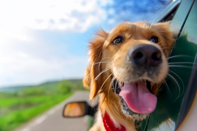 Auch für Herrchen oder Frauchen ist es sinnvoll, den Hund im Inneren des Wagens zu halten. (#02)