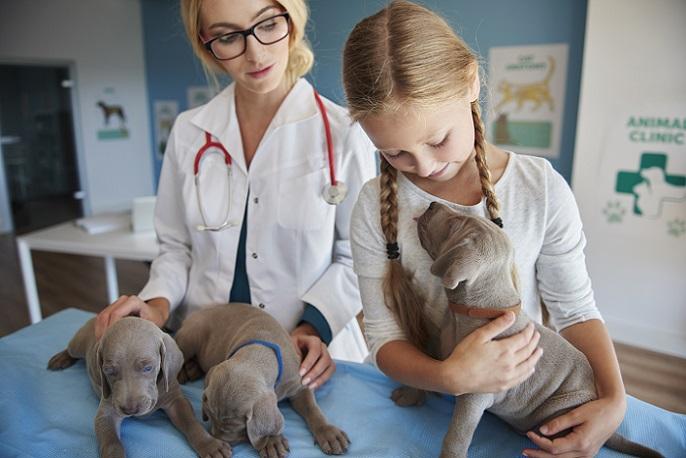 Ein Besuch beim Tierarzt beispielsweise ist dEin Besuch beim Tierarzt beispielsweise ist der erste 'Härtetest' (#24)er erste 'Härtetest' (#24)