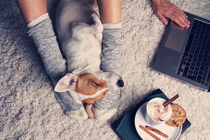 Liebhaben – das muss man Hunde einfach! (#04)