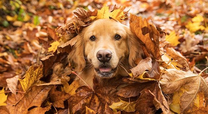 Gerade im Herbst gibt es dabei richtig viel zu entdecken! (#06)