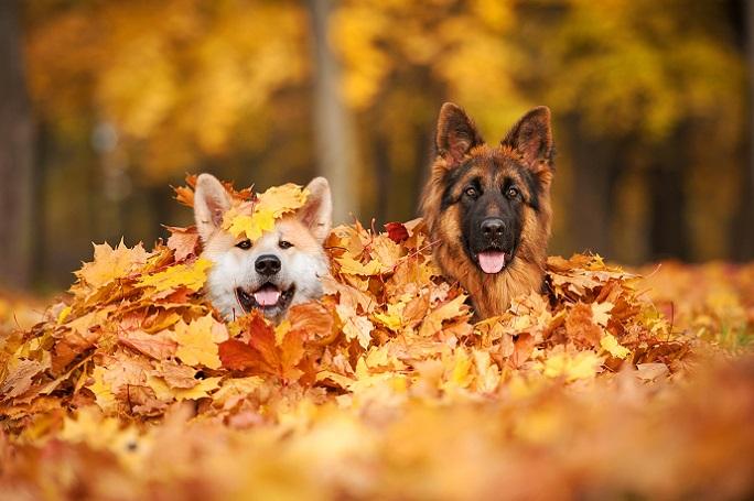 Zusammen mit den Hundefreunden macht die Jahreszeit der fallenden Blätter noch viel mehr Spaß. (#07)
