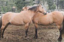 SOS-Pferdehilfe: Pferde (wieder) glücklich machen