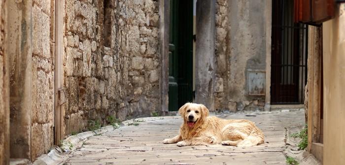 Hundefreundlich: Kroatien - ein Traum für jeden Hundebesitzer