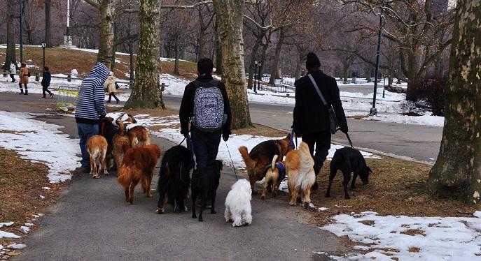 Verschiedenste Anbieter veranstalten geführte Spaziergänge durch New York für Hund und Herrchen oder Frauchen. (#04)