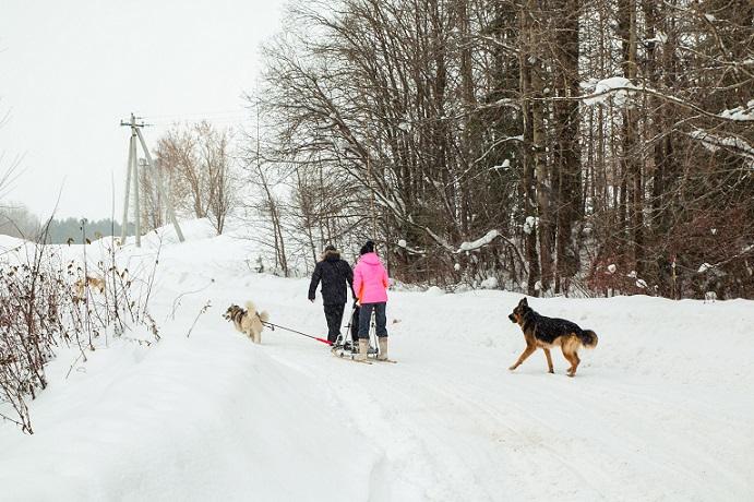 Immer mehr Hundebesitzer wollen ihren Vierbeiner in der Urlaubszeit bei sich haben. Das Allgäu ist nicht nur für Menschen, sondern auch für Hunde ein sehr schönes Urlaubsziel. (#01)