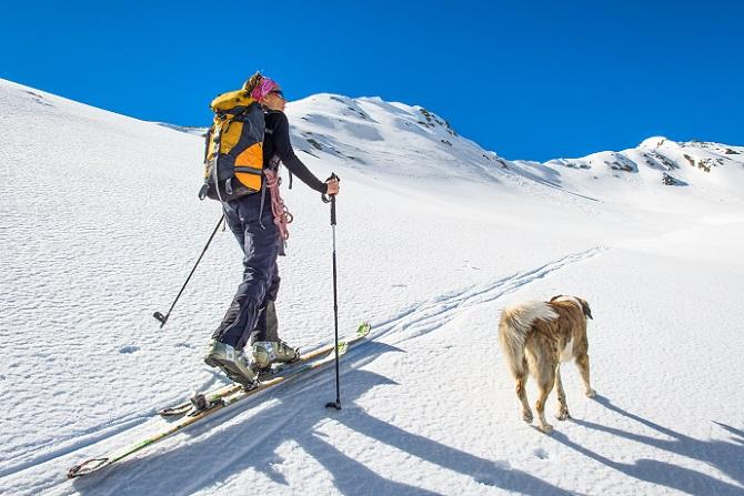 Skiurlaub mit Hund im Allgäu – eine solche Reise ist durchaus möglich. Die meisten Hunde haben sehr viel Spaß beim Toben und Tollen im Schnee. (#02)