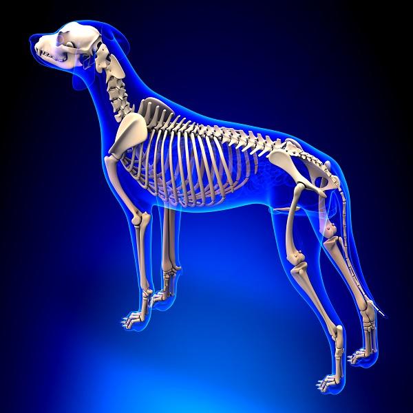 Geht es um die Anatomie des Hundes, so darf bei einer Betrachtung das Gebiss nicht fehlen. (#03)