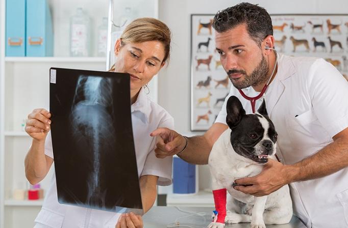 Die Anatomie besteht bei einem Hund ebenso wie bei Menschen zudem aus Binde- und Fettgewebe. Das Bindegewebe wird vor allem durch Kollagen ausgemacht, wobei sowohl eher faserarmes als auch faserreiches Bindegewebe vorkommt. (#06)