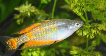 Fischarten: Liste der Süßwasserfische