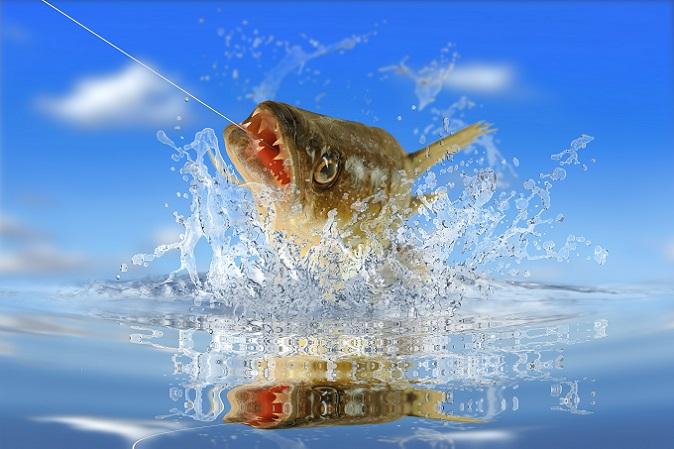 Der Zander kann eine Länge bis zu 70 Zentimetern erreichen und in etwa genauso alt werden wie der Karpfen. Der Fisch lebt in einer Tiefe von bis zu 30 Zentimetern und hat – da er als Allesfresser gilt – selbst bereits viele andere Fischarten dezimiert. (#07)