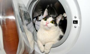 Ein erster Schritt, den Haushalt katzensicher zu machen, ist das Verschließen der Waschmaschine. In der Waschmaschine hat die geliebte Katze nichts verloren! (#3)