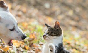 Ein Hund weiß oft nicht mit dem plötzlich veränderten verhalten der rolligen Katze umzugehen. Da kann es schon mal zu Missverständnissen zwischen den beiden Hausgenossen kommen. (#4)