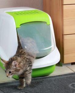 Katzen sind sehr reinliche Tiere. Die Samtpfoten schätzen es, wenn Frauchen die Katzentoilette regelmäßig reinigt. (#5)