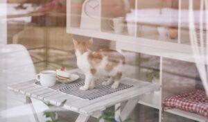 wenn die Katze auf dem Tisch steht, begeistert das außer ihr niemanden. Vor allem Gäste mögen dies nicht. (#2)