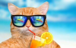 Im Urlaub braucht die Katze viel Zuwendung. Die katzenpension ist nicht die beste, aber eine mögliche Lösung, wenn die Samtpfote nicht mit nach Teneriffa kann. (#4)