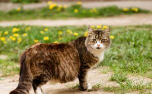 Die trächtige Katze braucht zur Niederkunft einen Wurfbereich. Und zwischendurch braucht sie auch schon mal eine Kuschelhöhle, in die sie sich zurückziehen kann. (#5)