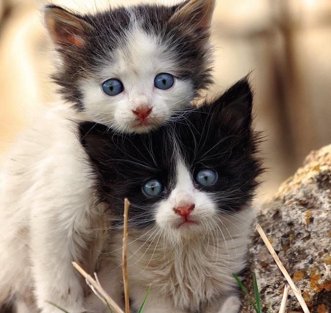 Katzenbilder: Die 30 tollsten Bilder von Katzen