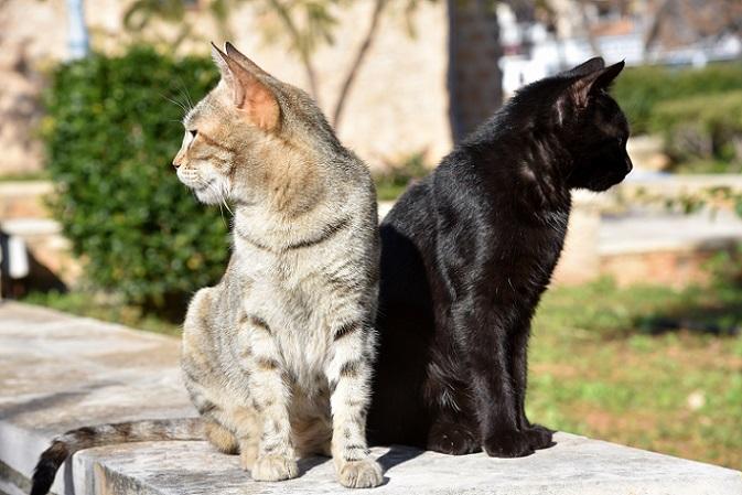 katzenbilder die 30 tollsten bilder von katzen. Black Bedroom Furniture Sets. Home Design Ideas
