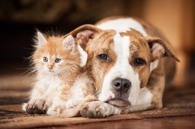 Wie Hund und Katze? Diese beiden süßen Tier zeigen, dass man sich trotzdem verstehen kann. (#15)