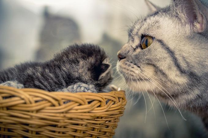 Mutterliebe – Mama und Kitten vereint. (#26)