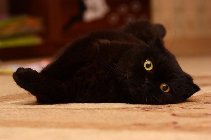 In der Nacht sind alle Katzen Grau – nur diese nicht. (#23)