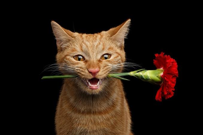 Willst Du mein Valentin sein? (#19)