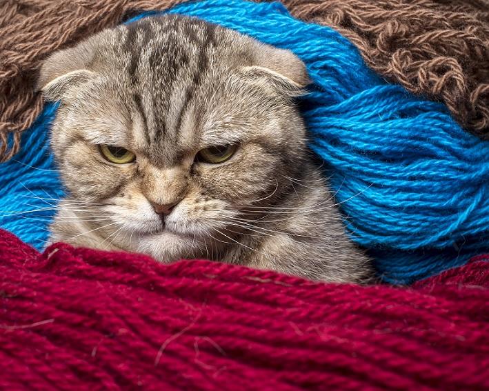 Gar nicht witzig – dieses Kätzchen kann grad gar nicht lachen. (#13)