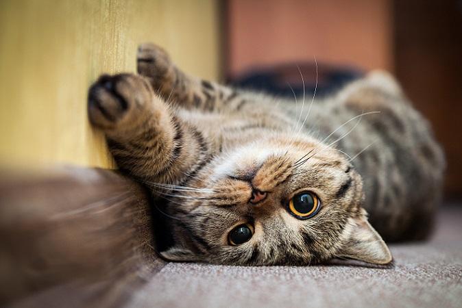 Ganz entspannt – Katzen kommen in den lustigsten Positionen zur Ruhe (#02)