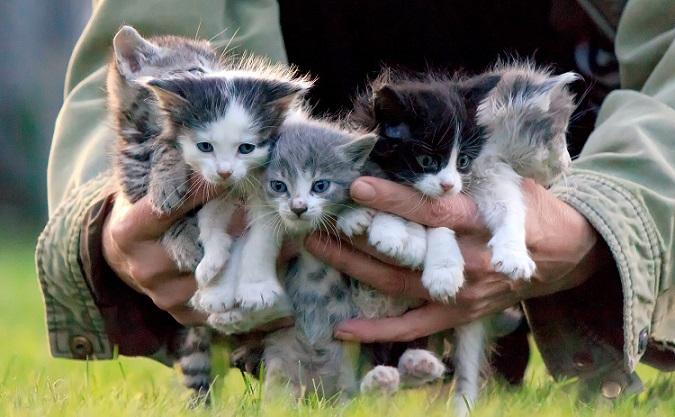 Hier ist ein Kitten süßer als das andere. (#28)