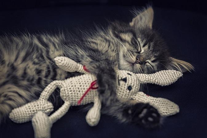 Du bist mein bester Freund – auch Katzen brauchen was zum Kuscheln. (#08)