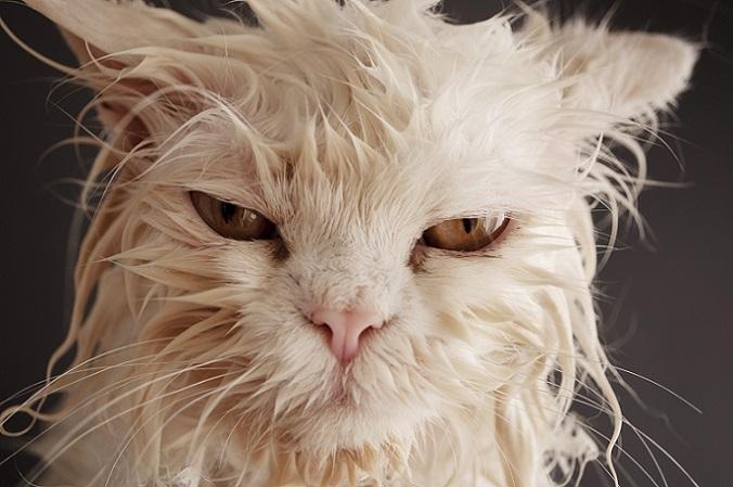 Was guckst du so? – Hier sieht die Katze aus wie ein begossener Pudel (#08)