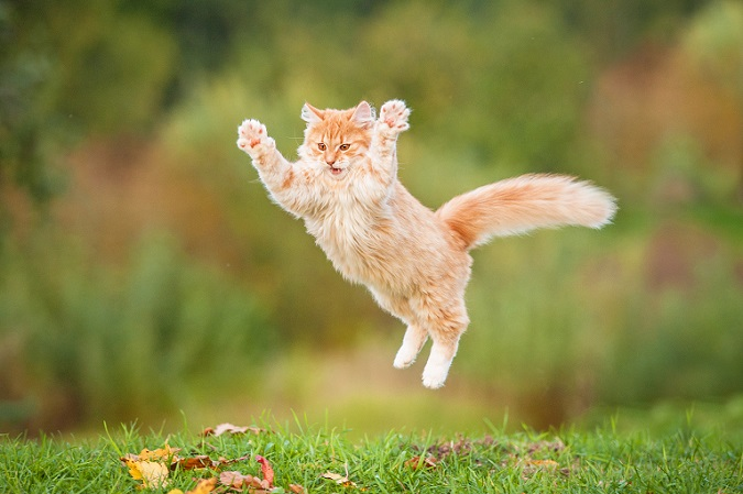 Gleich hab ich dich – diese Katze weiß genau, wie sie die Blätter am besten fangen kann. (#12)