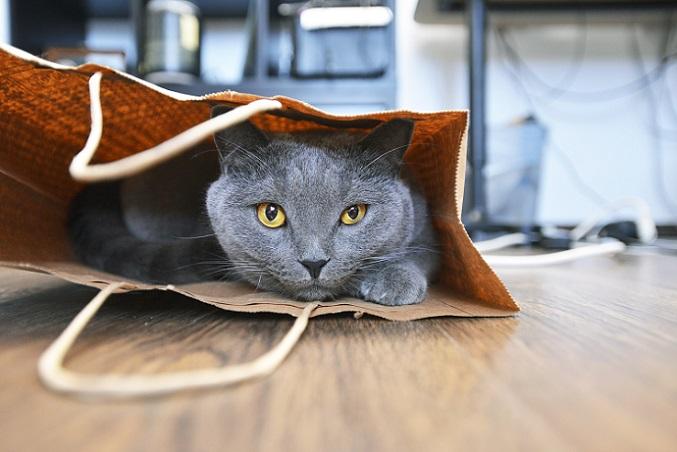 Die Katze in der Tasche – Stubentiger finden überall ihren Platz. (#22)