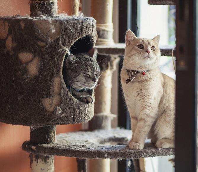Der Katzenbaum ist der Katze liebstes Spielzeug. (#27)