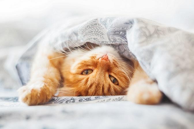 Muss ich schon aufstehen? Auch Katzen möchten manchmal einfach weiterschlafen. (#11)