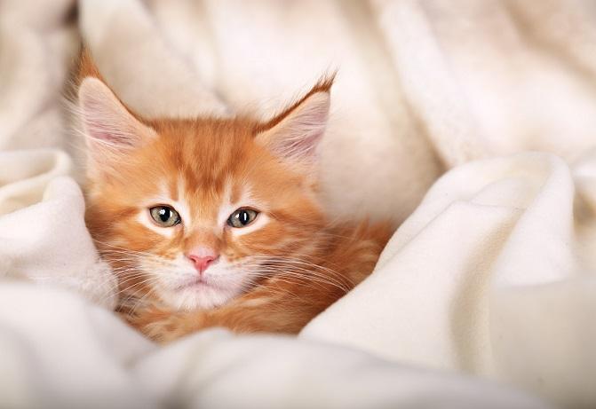 Hier fühlt sich die kleine Katze sichtlich wohl. (#25)